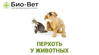Перхоть у животных. Ветеринарная клиника Био-Вет.