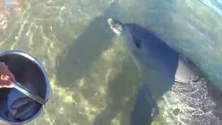 so much chatter/clicks/squeals from dolphin (Surprise)- Western Australia