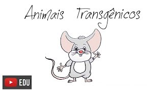 Como são feitos os animais transgênicos? | How are transgenic animals made?