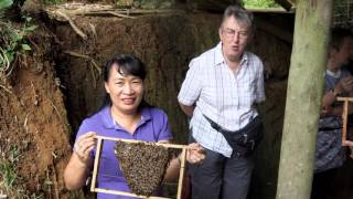 2015 11 Vietnam bee safari