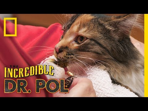Kitten Gone  Fishin  | The Incredible Dr. Pol