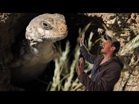 Reptiles of the Mojave Desert Part 1