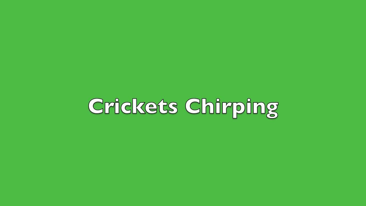 Image result for crickets sound