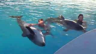 """Плавание с дельфинами в Турции, Анталия, дельфинарий """" DolphinLand"""", 30.10.2013."""