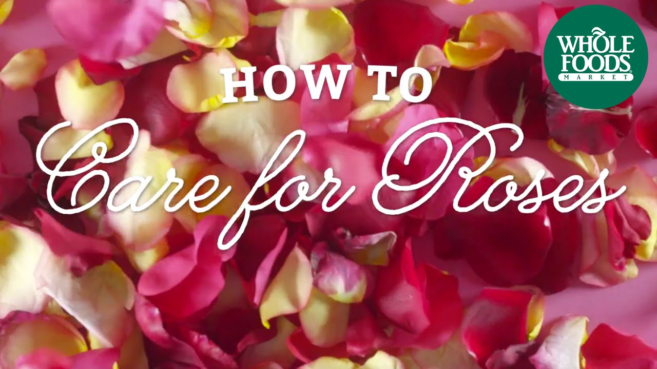 How To Care For Roses | Mother's Day Technique | Whole ...