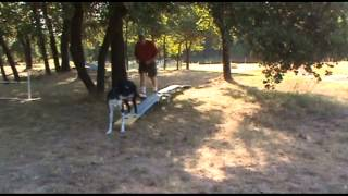 Independent Agility Contact Training #3 - Lincoln - Dogwalk Prep