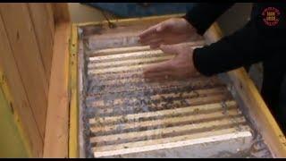 Repeat youtube video Lectie despre iernarea albinelor in stupi - Sfaturi utile - Apicultura la distanta cu Proful Online