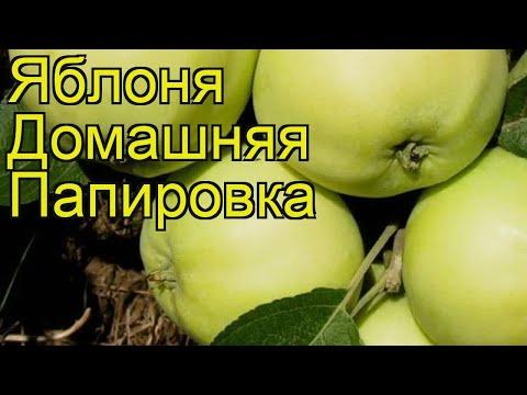 Яблоня домашняя Папировка. Краткий обзор, описание характеристик malus domestica Papirovka