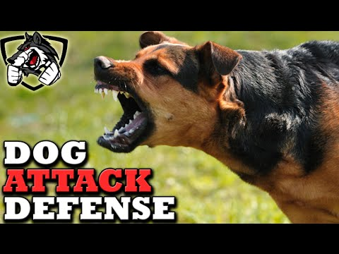 How to Defend Against a Dog Attack
