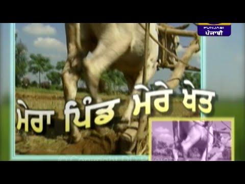 Mera Pind Mere Khet | 06 December 2019 | Latest Show | DD Punjabi