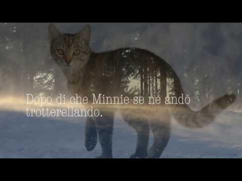 Anche gli animali hanno un'anima. La storia vera di un gatto oltre la vita