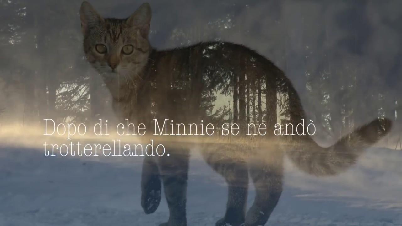 Anche Gli Animali Hanno Unanima La Storia Vera Di Un Gatto Oltre