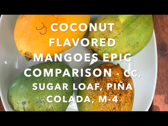 Epic Mango tasting 2020 - Coconut Flavored Mangoes - Coconut Cream, Sugar Loaf, Piña Colada, M-4