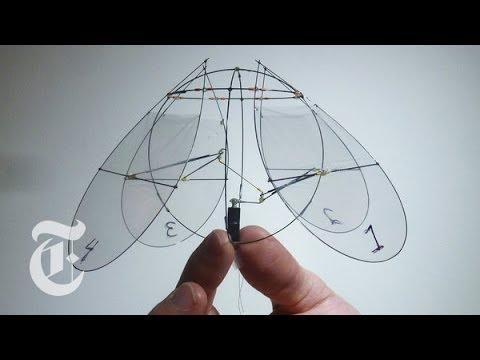 Flying Jellyfish   ScienceTake w/ James Gorman   The New York Times