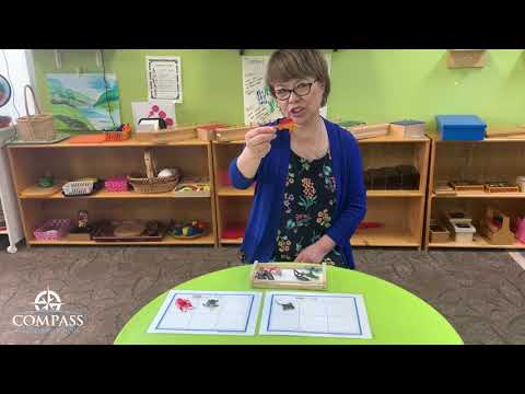 Five Oceans: Fish and Not Fish | Remote Lesson | Compass Montessori School of Federal Way