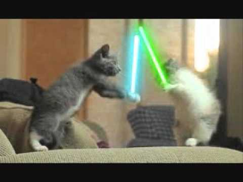 cats and lightsabers youtube