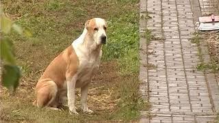 За город. Ирина Тихомирова: собаки, лошади и свобода...