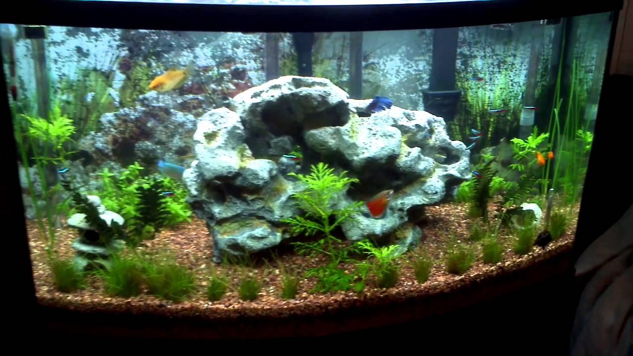 38 Gallon Bow Front Aquarium Home Image Ideas