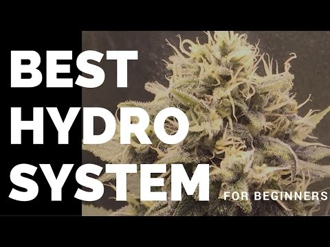 Best Cannabis Hydro System For Beginners