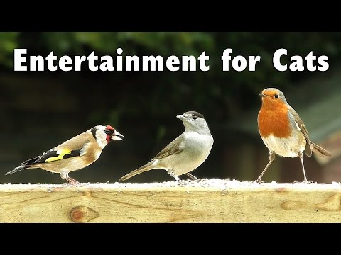 Videos for Cats to Watch - One Hour of Garden Birds