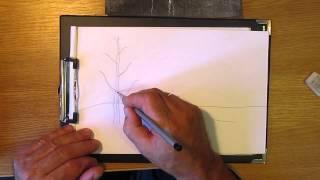 Как рисовать берёзу. Часть 1. Урок 9