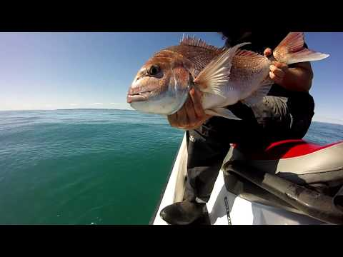 Jetski Fishing Catching Snapper On Soft Baits