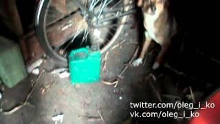 Животные в Никишино 22. Собаки, которые вместе, без хозяев, живут в гараже