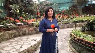 Flower Exhibition Centre - Gangtok || Annual Flower Show at Gangtok , Sikkim