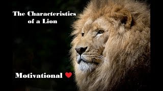 The Characteristics of a Lion - Motivational                  #Lion #TheLionKing #Leader #Leadership