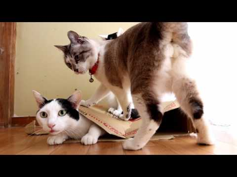 潰れた箱と猫 Box and cat 2017#2170224