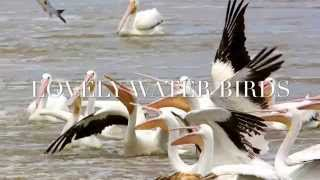 EXCELLENT IMOVIE ON WATER BIRDS IN MYSORE ZOO, 2015