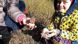 Где белые грибы? Как мы в лес ездили. Отдых на природе.