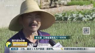 [国际财经报道]原产地访价格 云南通海:菜价有涨有跌 价格总体平稳| CCTV财经
