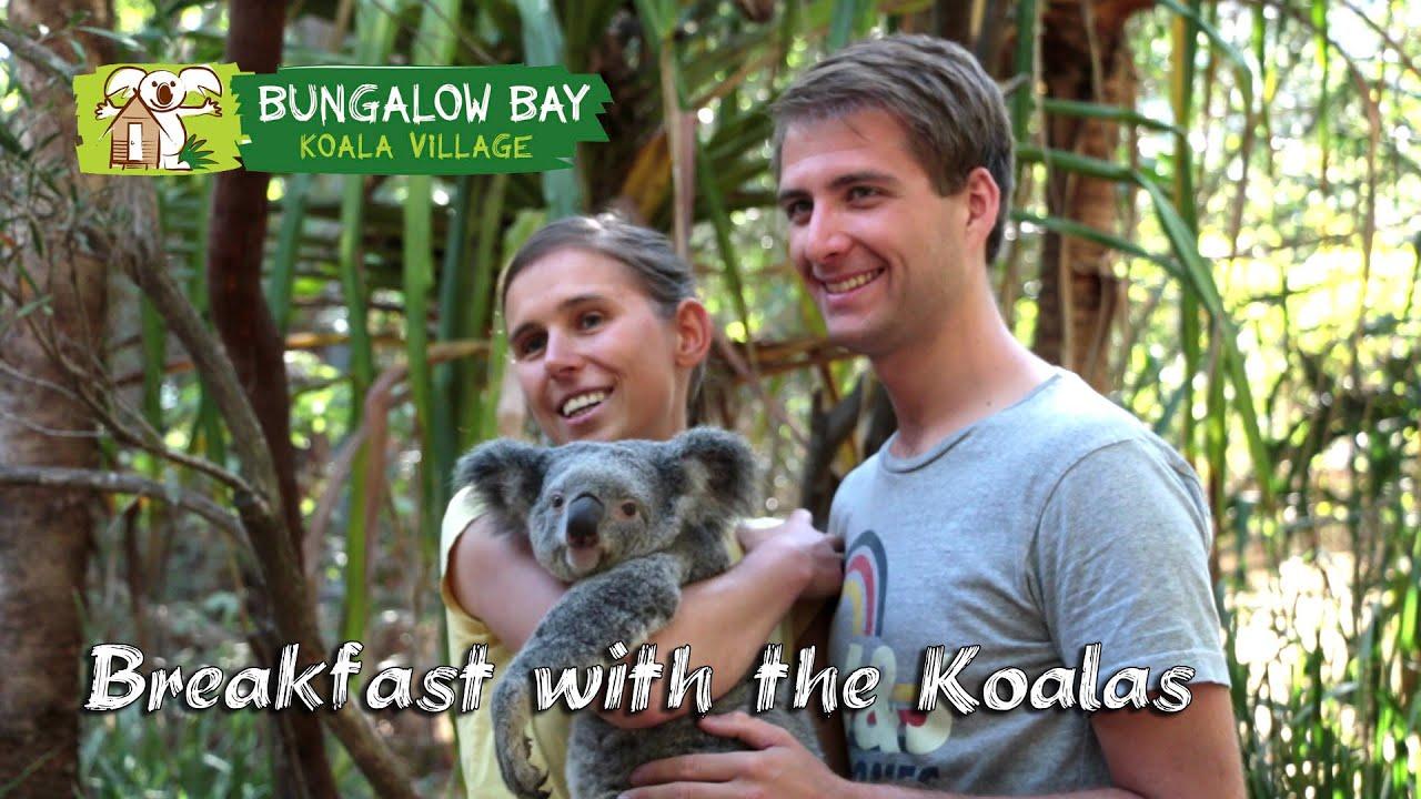 video Magnetic Island Breakfast with Koalas