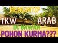 TKW BOHAAY ARAB SAUDI// Terpaksa aku lakukan di bawah pohon KURMA