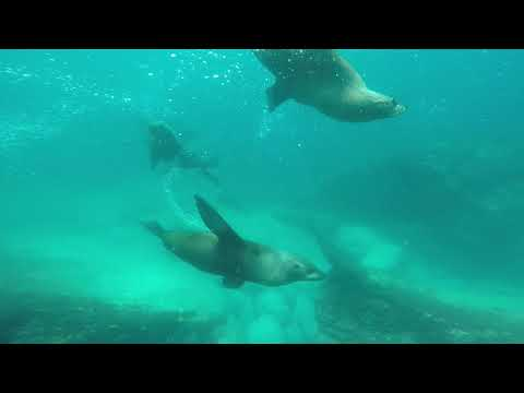 Video Of The Week | Swim with Seals  Dive Jervis Bay