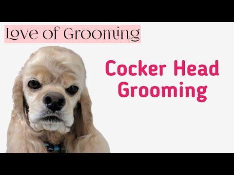 Grooming a Cocker Spaniels Head