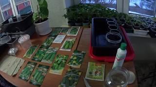 Обзор семян огурцов и замачивание  для высадки рассады в теплицу