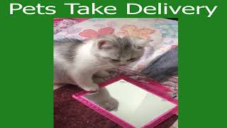 Pets Take Delivery Funny Cute Animals: Tik Tok Pets