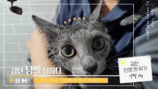 김탄 냥빨 당하다 [고양이 목욕] | 고양이 목욕시 준…