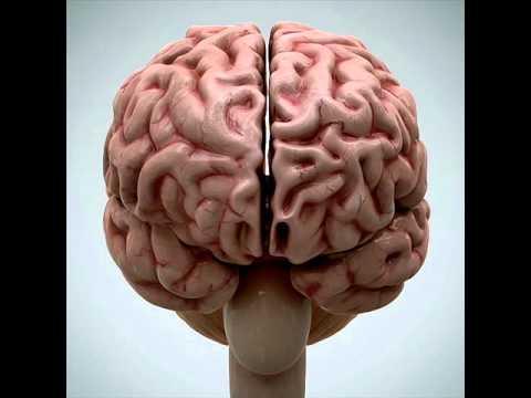 Brain 3D Model | Science / Medical 3D Models | max, 3ds, c4d, obj, lwo