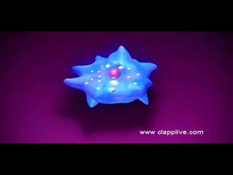 Asexual reproduction by binary fission in amoeba video