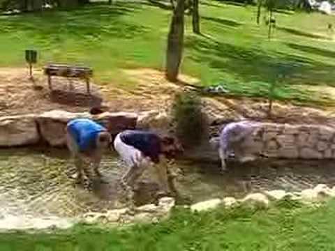 Ein Harod (Harod's Well)