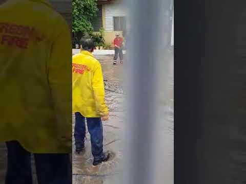 Susto mayúsculo al aparecer un cocodrilo en una calle inundada en México