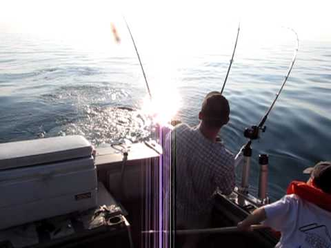 Rainbow trout fishing lake erie youtube for Lake erie fishing report central basin
