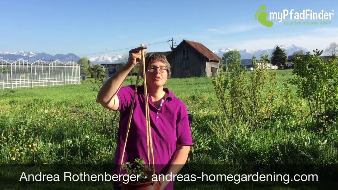 Fabelhaft Hängeerdbeeren pflanzen - YouTube &EI_16
