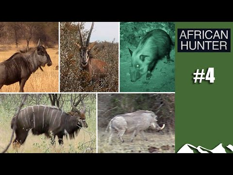 Plainsgame Five: Nyala, Wildebeest, Sable, Warthog And Bushpig - African Hunter, Episode 4