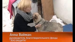 Догхантеры появились и в Екатеринбурге