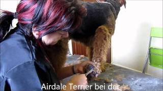 Hundepflege/grooming - Trimmen, Schneiden, Scheren...