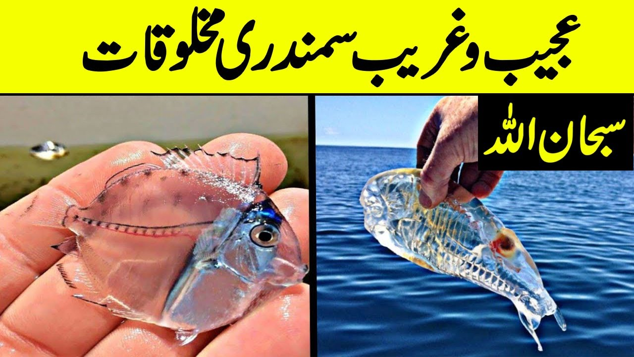 Strange and most dangerous fishes found in sea must watch | Unique fished | Daily cover